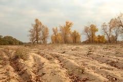 Letea forest and sand dunes. Letea Forest in autumn, Danube Delta, Romania Stock Image