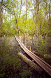 Letea-Wald, der Bezirk Tulcea, Rumänien Stockfotografie
