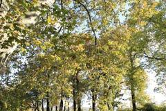 Letenpark - Praag royalty-vrije stock foto's