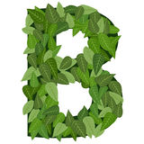 Leter B with leafs Royalty Free Stock Photography