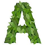 Leter A with leafs Royalty Free Stock Photos