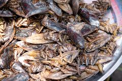 Lethocerus, Pimpa, Giant water bug as food in the local market Thailand.  royalty free stock photography
