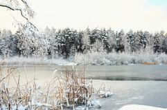 Letland. Winter. The stood pond. stock photos