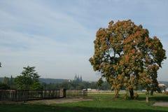 Letna: взгляд pláň Letenská, самая большая пустая равнина в p Стоковое Изображение RF