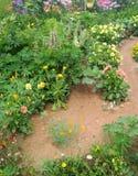 Letni dzień kwitnący ogród wijąca ścieżka jest zamieszką kolory zdjęcia royalty free
