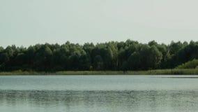 Letni dzień na wodnej ` s krawędzi zbiory wideo
