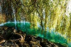 Letni dzień jeziorem Obraz Royalty Free