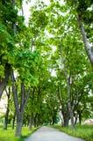 Letniego dnia gęsty jaskrawy - zielona trawa r w parku Na obich stronach r ampułę zielenieje drzewa zdjęcie stock