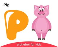 Letra amarilla P y cerdo rosado ilustración del vector