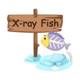 Letra animal X del alfabeto para los pescados de la radiografía ilustración del vector