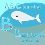 Letra bonito ABC k do alfabeto B dos desenhos animados do animal de mar do vetor do mamífero do mar do vetor da baleia branca dos Fotografia de Stock Royalty Free