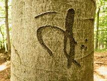 Letra china o japonesa Cuchillo que talla en corteza de árbol Vandalismo del árbol en bosque Foto de archivo
