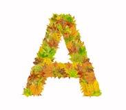 A letra A do alfabeto feita das folhas de outono Fotografia de Stock