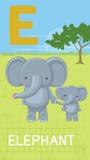 Letra E, ABC animal Imagenes de archivo
