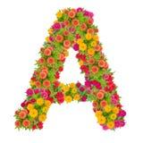 Letra el alfabeto de A hecho de la flor del zinnia Imagen de archivo