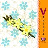 Letra inglesa V vainilla Imagen de archivo libre de regalías