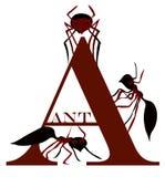 LETRA A (la hormiga) Imágenes de archivo libres de regalías