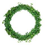 A letra O do alfabeto da folha, as folhas verdes naturais envolve-se, wrea da hera Fotografia de Stock Royalty Free