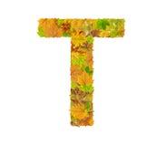 A letra T do alfabeto feita das folhas de outono Fotos de Stock Royalty Free