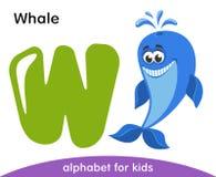 Letra verde W e baleia de sorriso azul ilustração royalty free