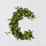 Letras del alfabeto de las hojas Foto de archivo libre de regalías