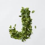 Letras del alfabeto de las hojas Foto de archivo