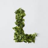 Letras del alfabeto de las hojas Fotografía de archivo