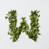 Letras del alfabeto de las hojas Fotografía de archivo libre de regalías