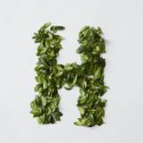 Letras del alfabeto de las hojas Imagen de archivo