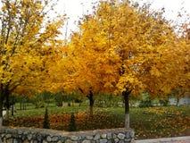 Letras del otoño Imagen de archivo libre de regalías