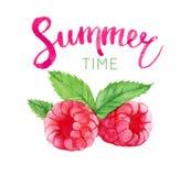 Letras del tiempo de verano y frambuesa de la acuarela, aislada Fotos de archivo