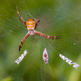 Letras que tejen de la araña Fotos de archivo