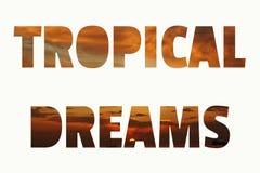 Letras tropicales Marr?n anaranjado vivo de la puesta del sol tropical y fondo coralino libre illustration