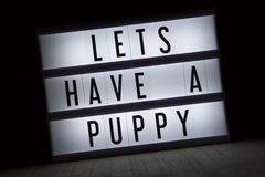 Lets have a puppy Royalty Free Stock Image