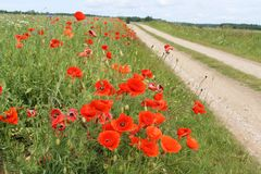 Lets platteland in de zomer Stock Afbeeldingen