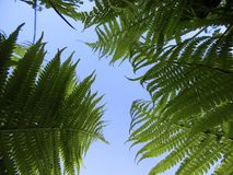 Lets roll in ferns and look at the sky stock photo