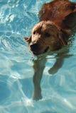 Lets va para una nadada Imagen de archivo libre de regalías