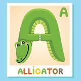 A is for Alligator. Letter A. Alligator. Animal alphabet. Letter A. Alligator, cute illustration Animal alphabet Royalty Free Stock Image