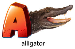 A letter A for alligator Stock Images