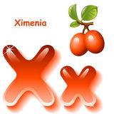 Letter X. Alphabet. English capital and uppercase letter X, stylized color of ximenia juice. branch orange ximenia with leaf. vector illustration stock illustration