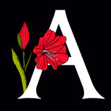 Letter A with Amaryllis Flower Royalty Free Stock Photo