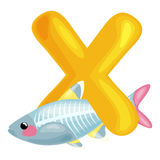 Letter X with animal x-rayfish for kids abc education in preschool. Animal x-rayfish and letter X for kids abc education in preschool.Cute animals letters Stock Illustration