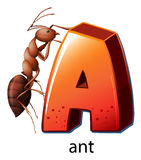A letter A for ant Stock Photo
