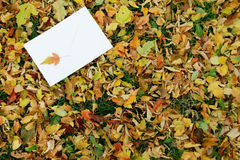 Letter on the autumn background Royalty Free Stock Image