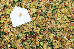 Letter on the autumn background Stock Image
