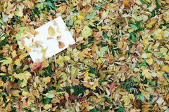 Letter on the autumn background Royalty Free Stock Photos