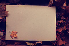 Letter with autumn fallen leaves Royalty Free Stock Image