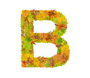 The letter B of alphabet made of autumn leaves Stock Photography