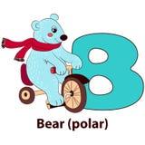 Letter B - Bear polar. Stock Image