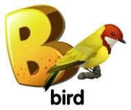 A letter B for bird Stock Photos